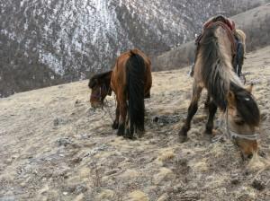 mongolie lac khosvgol 2