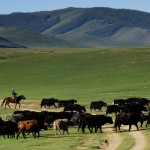 Mongolie-3