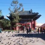 4-pigeons-de-la-paix-1024x682