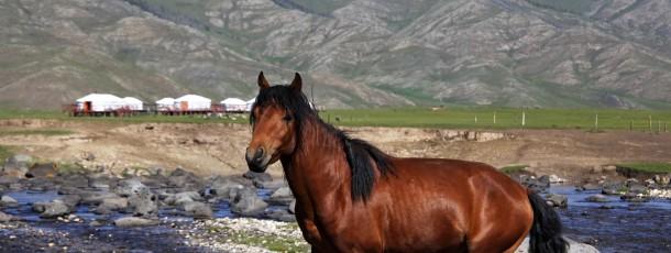 Petit guide de conversation Franco-Mongol pour votre séjour en Mongolie