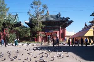 4 - pigeons de la paix