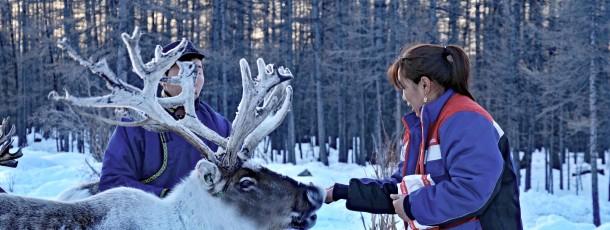 Tsaatans, éleveurs de rennes