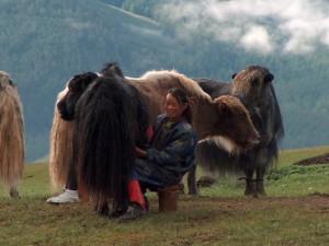 Mongolie Vallée de l'Orkhon