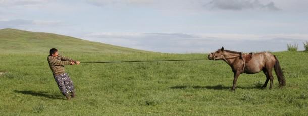 La course des chevaux lors du Naadam