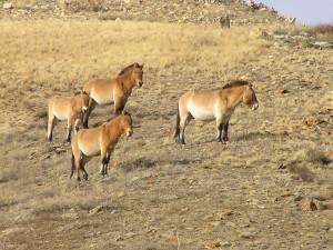 réserve de Khustain Nuruu
