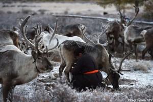 tsaatans mongolie
