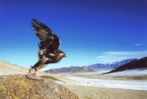 altai-trek-eagle