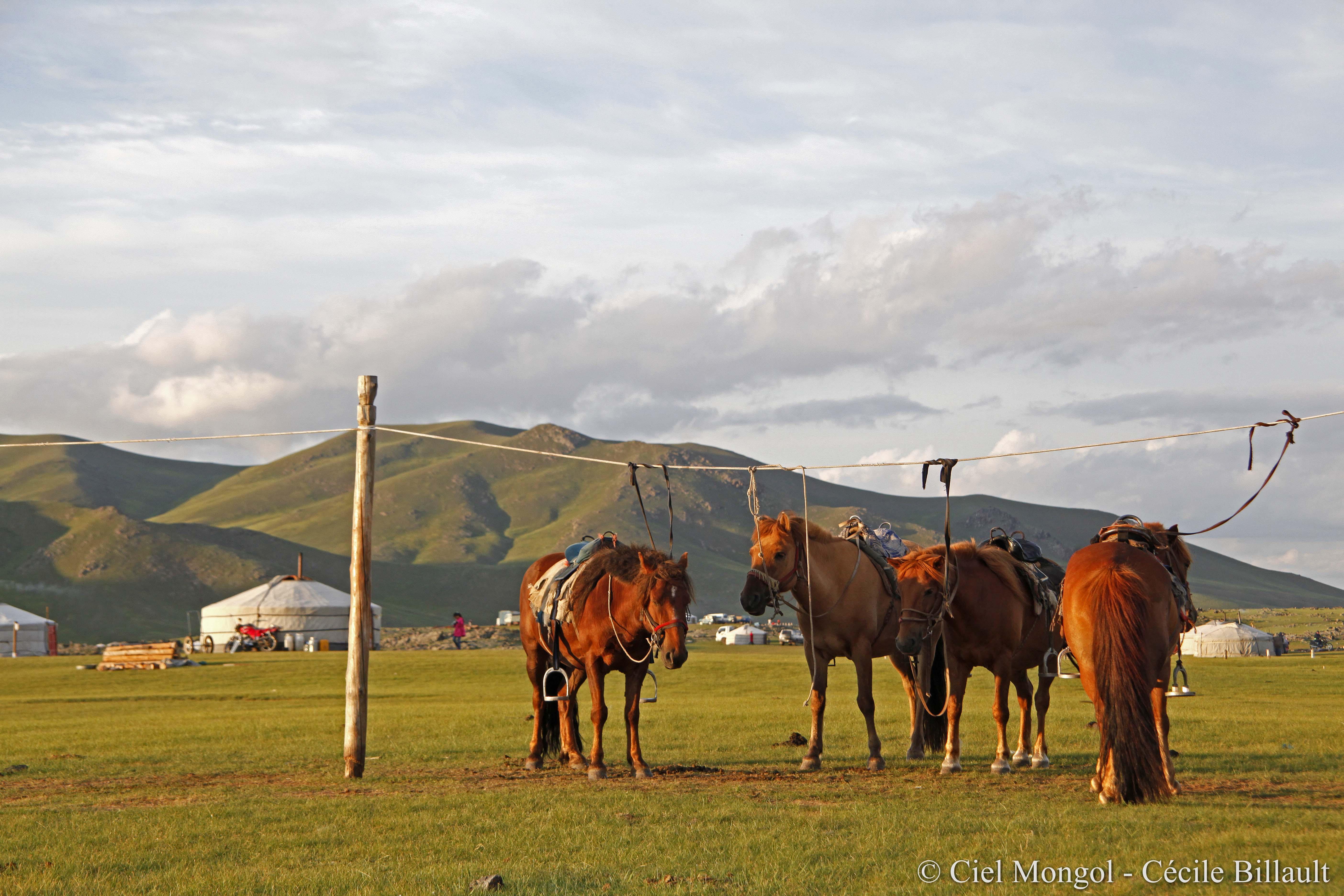 Orkhon cheval randonnée