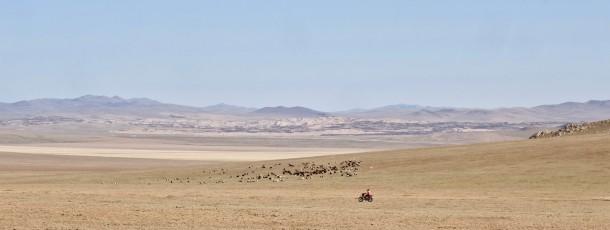 Potager et volontariat en Mongolie